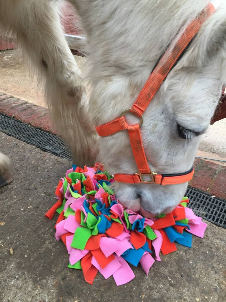 Stable toy for horse - Ruffle Snuffle treat rug