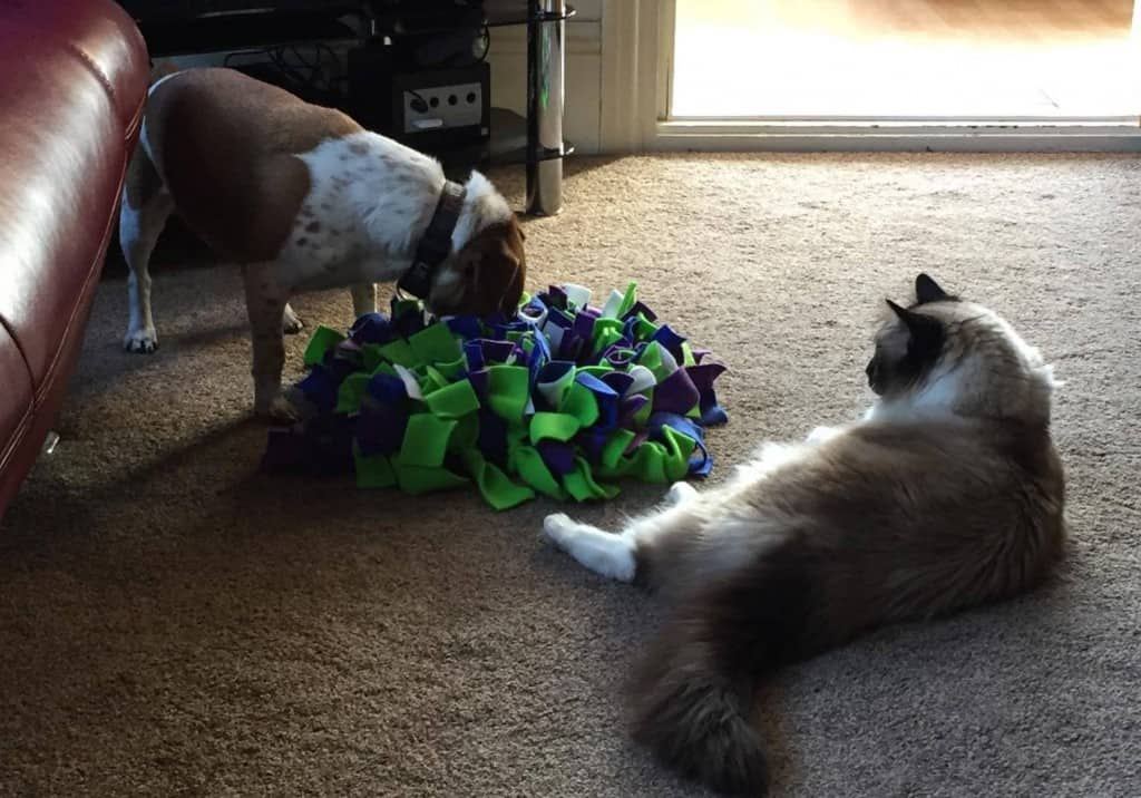 Cat and Dog play with ruffle snuffle mat