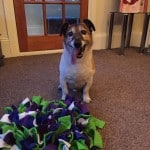 Ruffle Snuffle Mat for Dog