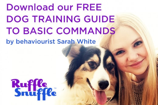 Free dog training guide to basic commands