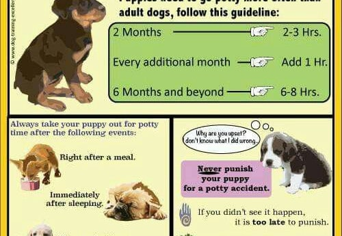 4a40ba896152bf7d60a9766a2284fb41 potty training puppies potty training tips