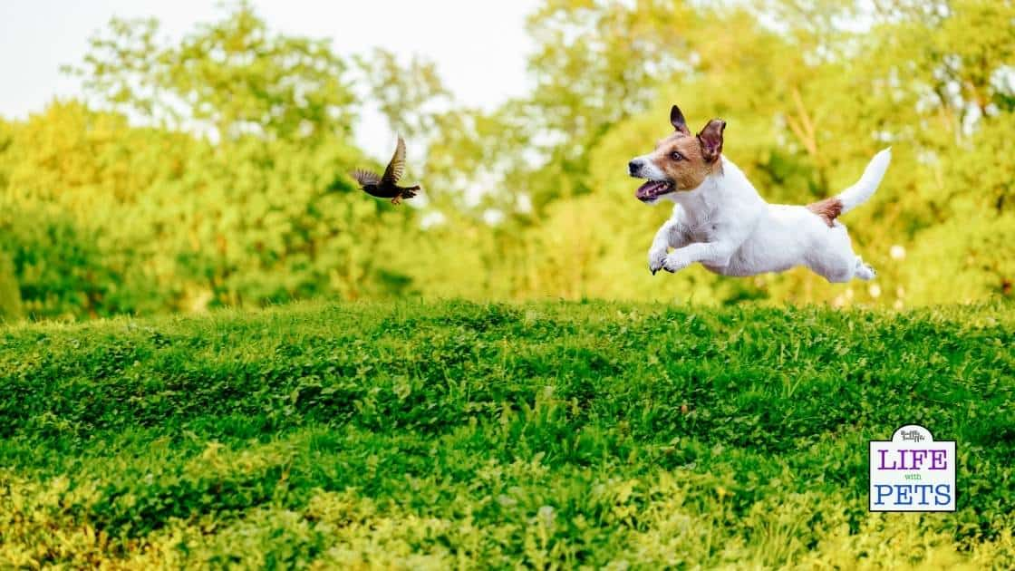 Stop your dog chasing birds