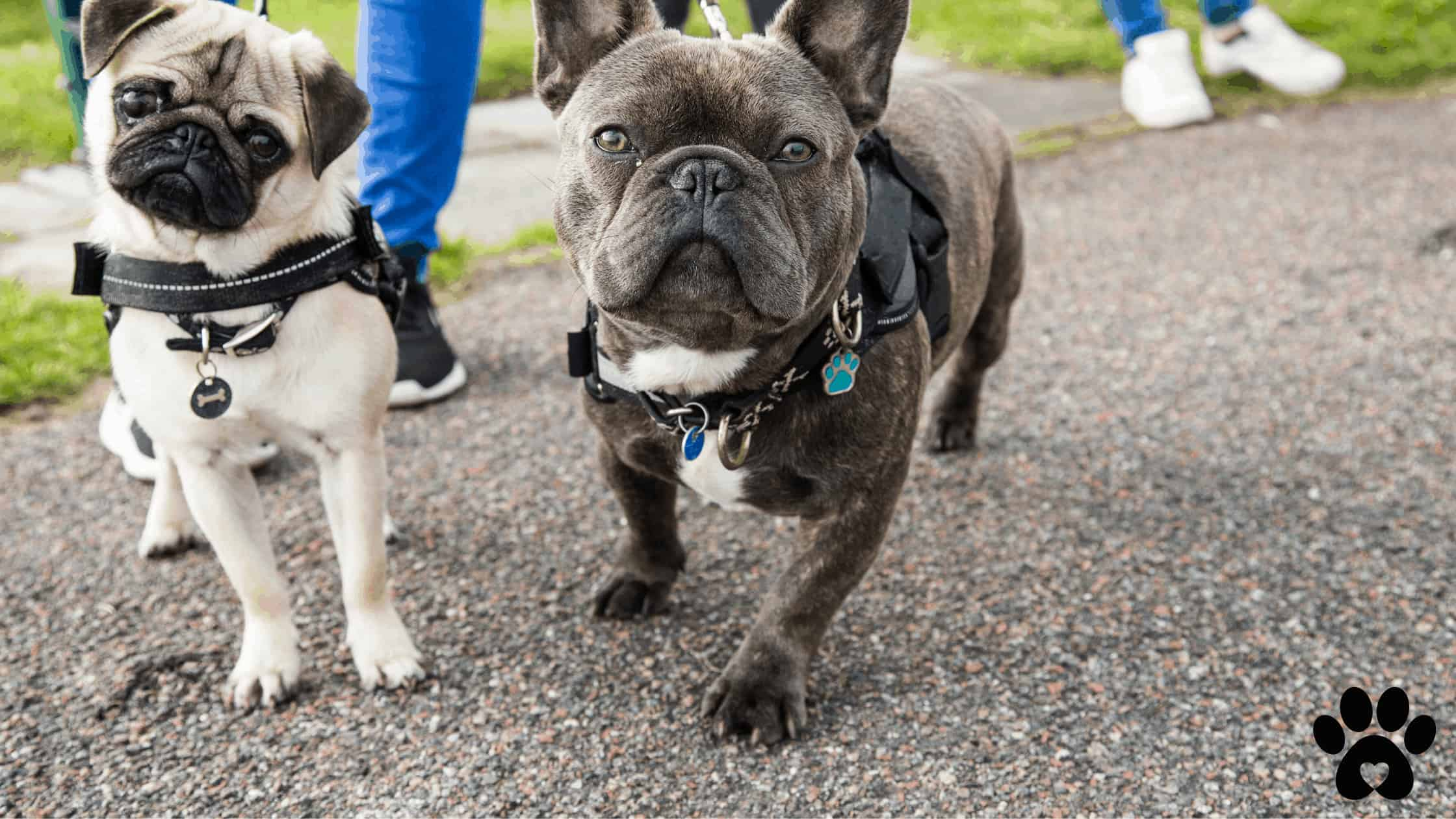 how to set up a dog walking business