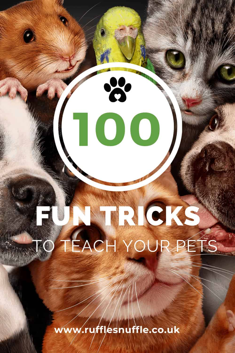 100 fun tricks to teach your pets