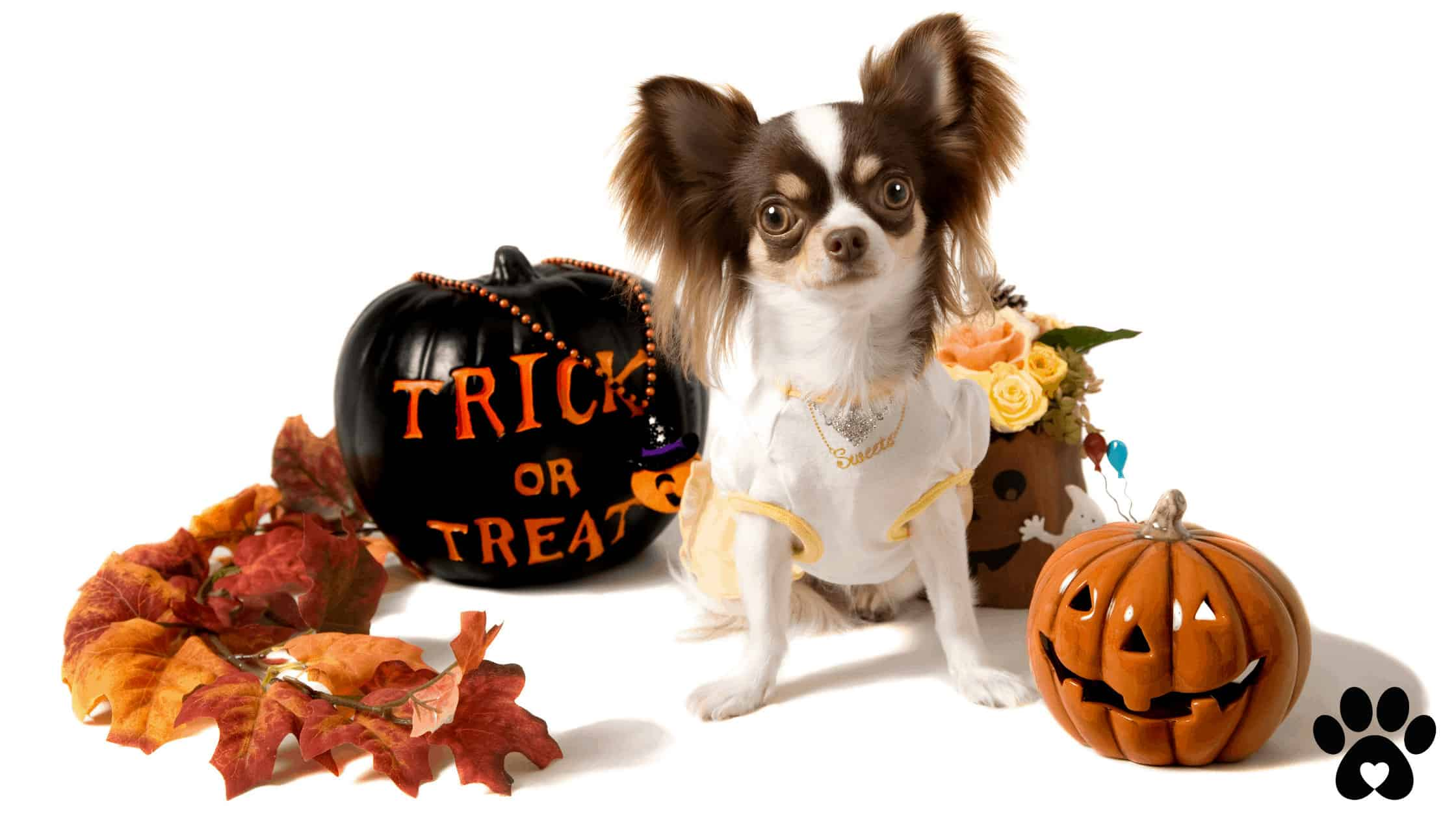 Halloween safety tips for pet owners