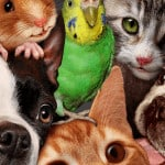 100 tricks to teach your pets