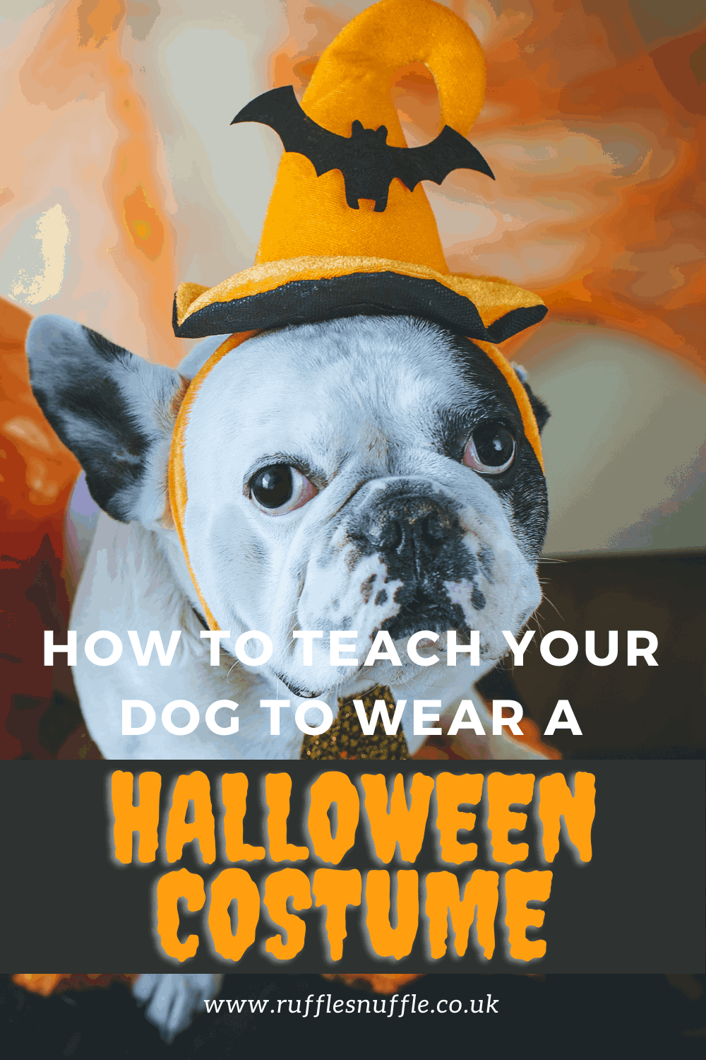Halloween costume ideas for dogs and how to teach your dog to wear one.