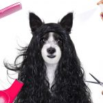 give your dog a haircut at home