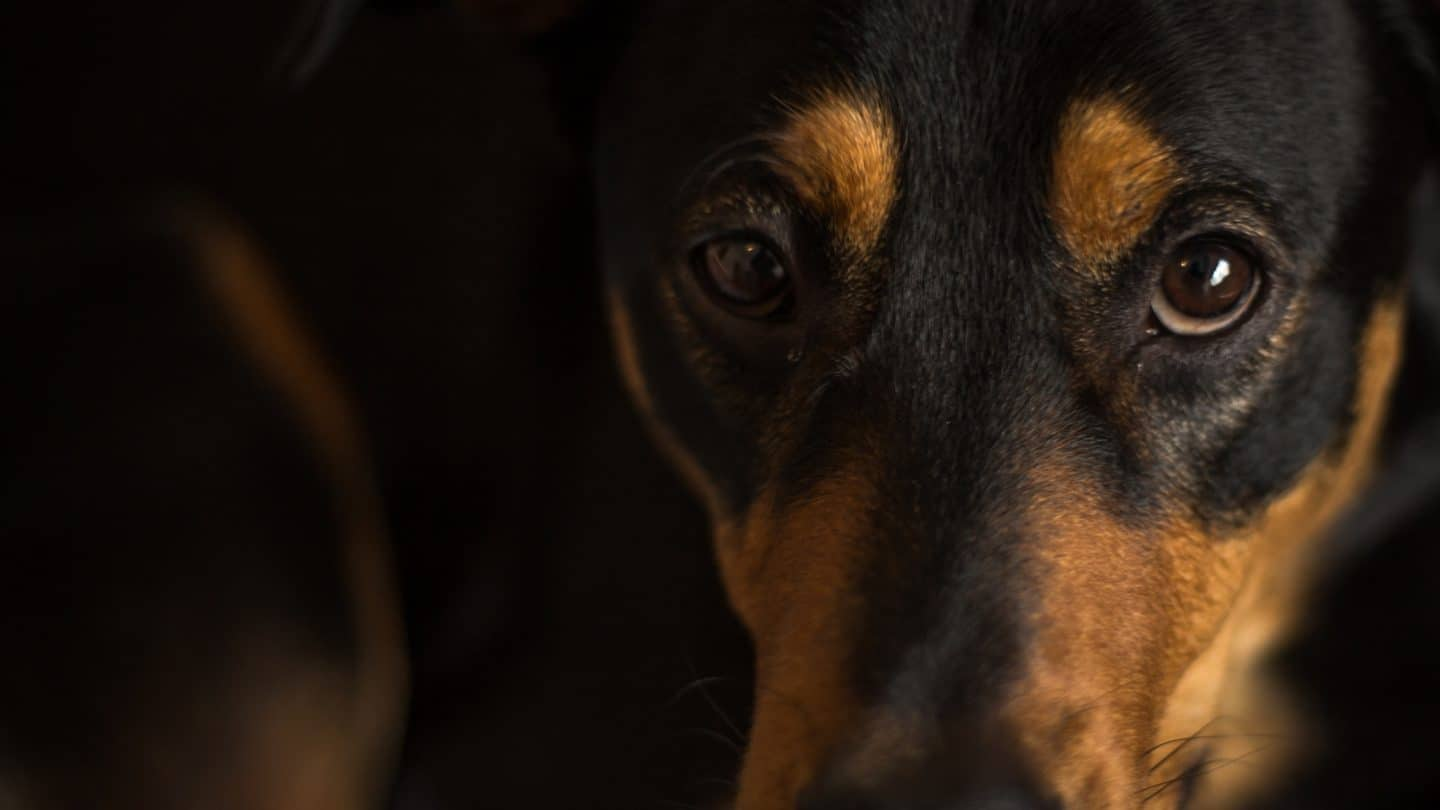 Can dogs sense ghosts?
