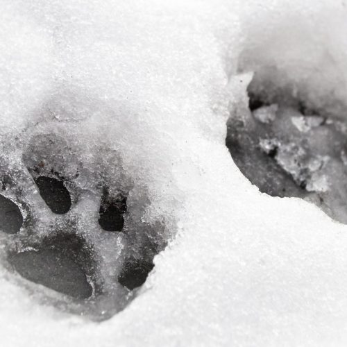 paw safe ice melter home made