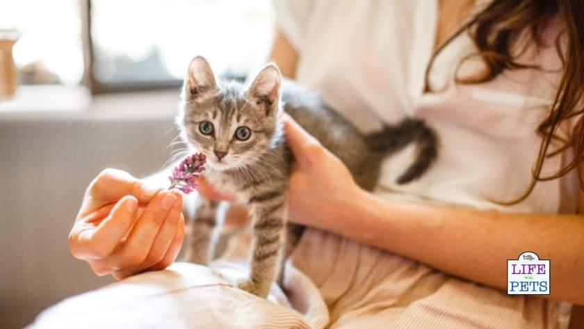 7 tips for bringing home a new kitten