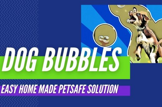 DIY Games FOR DOGS 1220 HEADERS 4