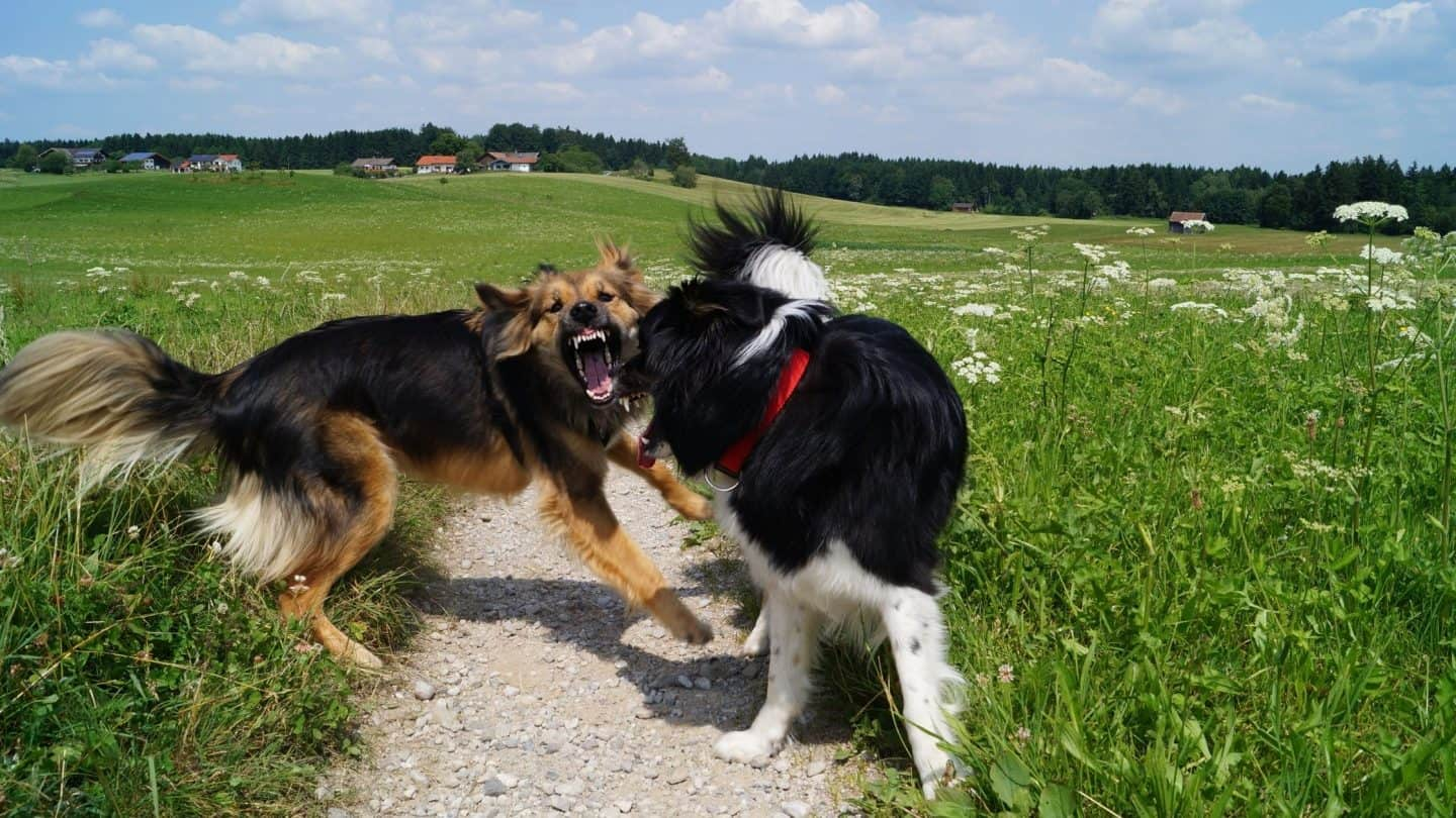 what to do if someone kicks your dog 2