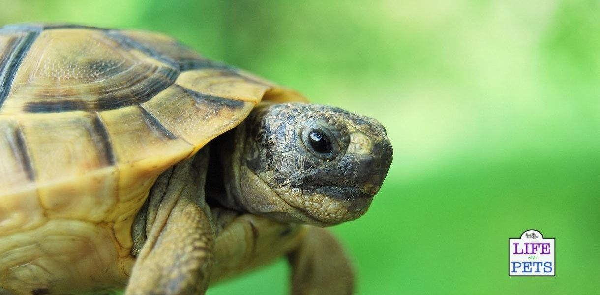 Copy of dehydrated tortoise
