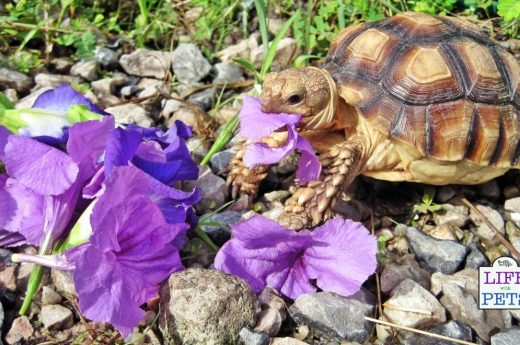 Copy of plants to feed tortoise at home