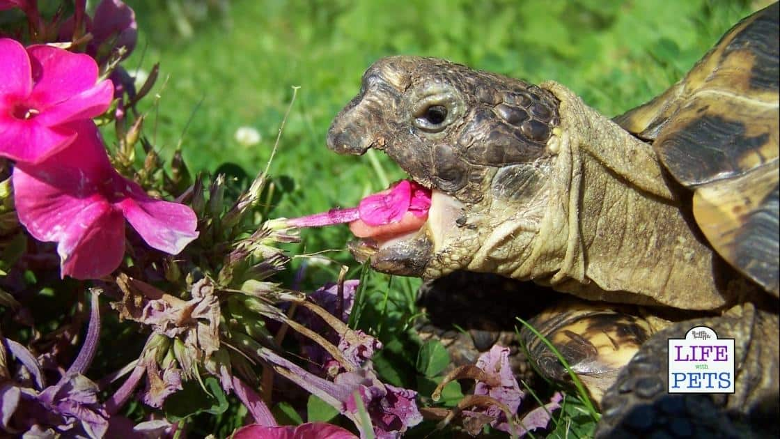plants to feed tortoise at home 2