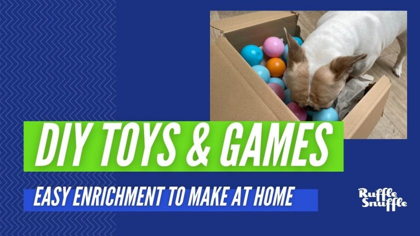 DIY Games FOR DOGS 1220 HEADERS 3