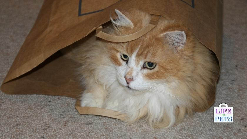 cat playing in paper bag