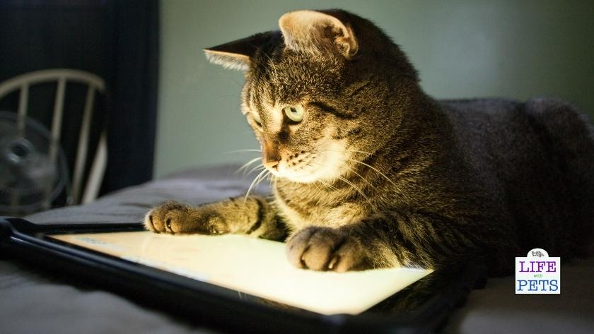 cats playing game on tablet