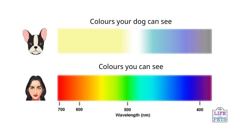 colours dogs can see compared to humans