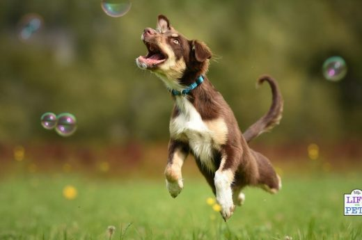 dog friendly bubble games to play