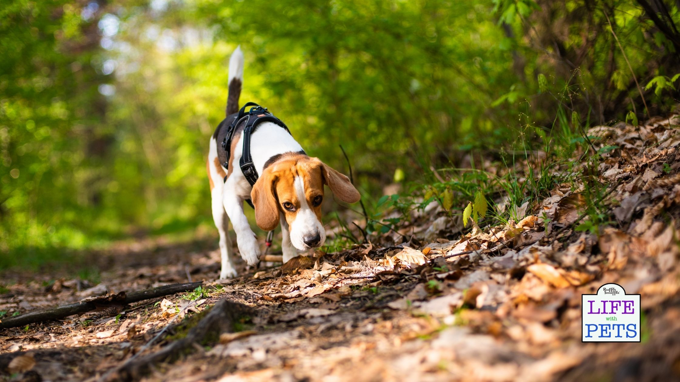 exercise for dog with heart murmur