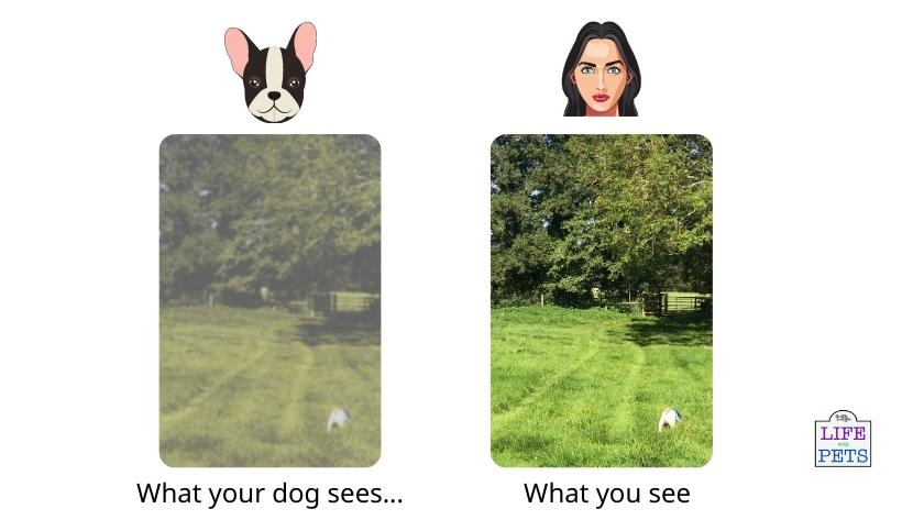 visual acuity in dog compared to human simulation side by side