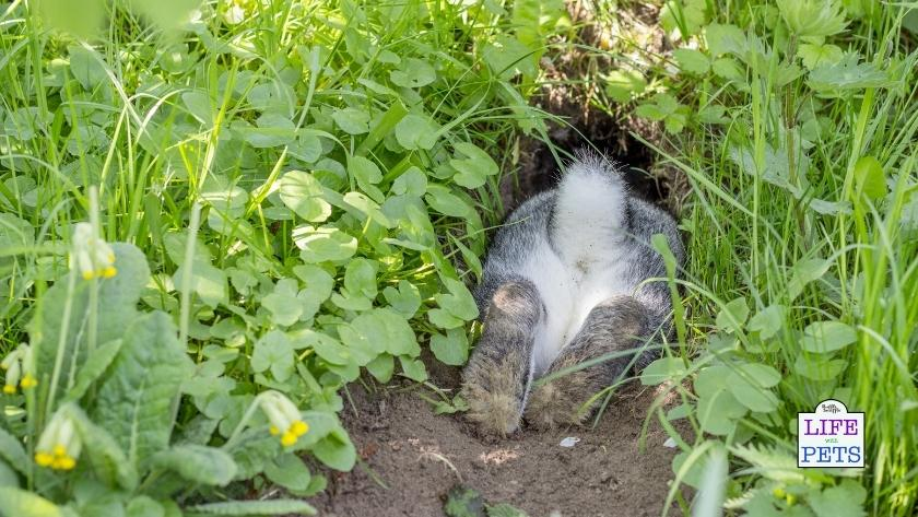 Rabbits love to dig!
