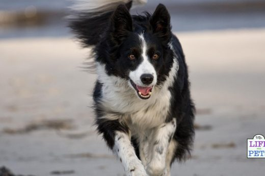 Copy of enrichment ideas for high energy dogs
