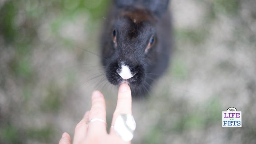Enjoy your life with your bunny rabbit.