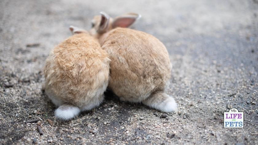 Rabbits are sociable and like to live together.