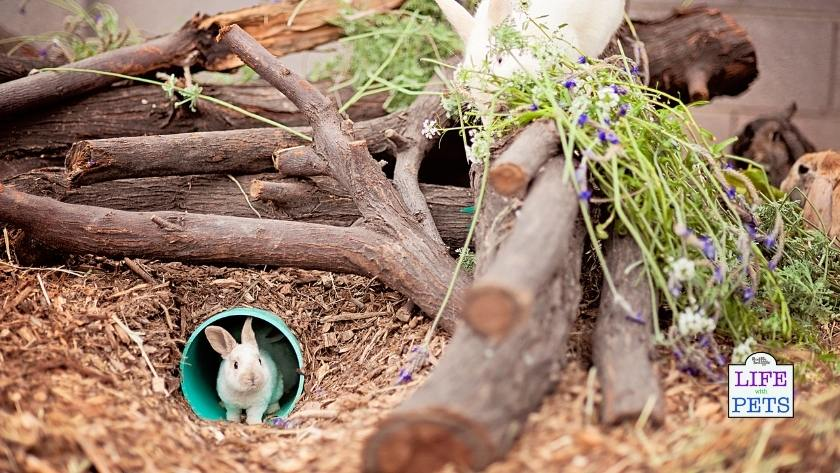 A rich and varied environment for your rabbits will provide them with plenty of stimulation.
