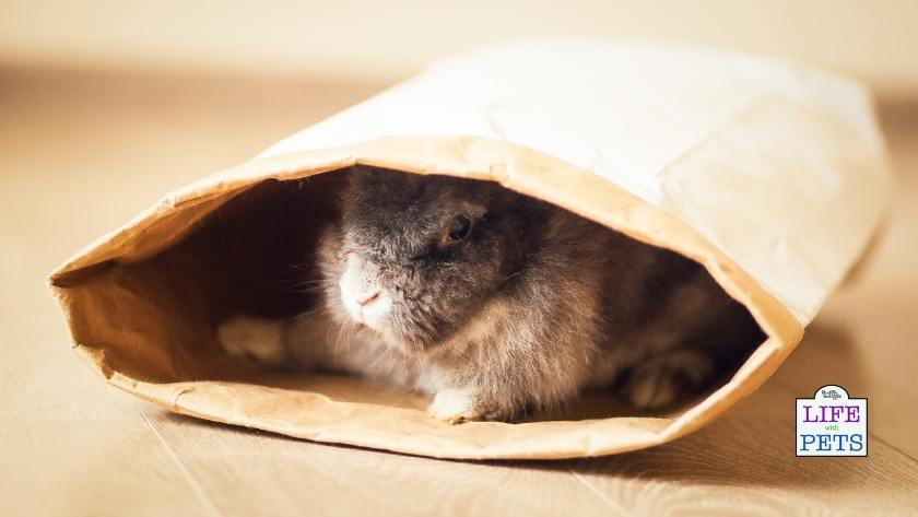 Rabbits like to hide in paper bags