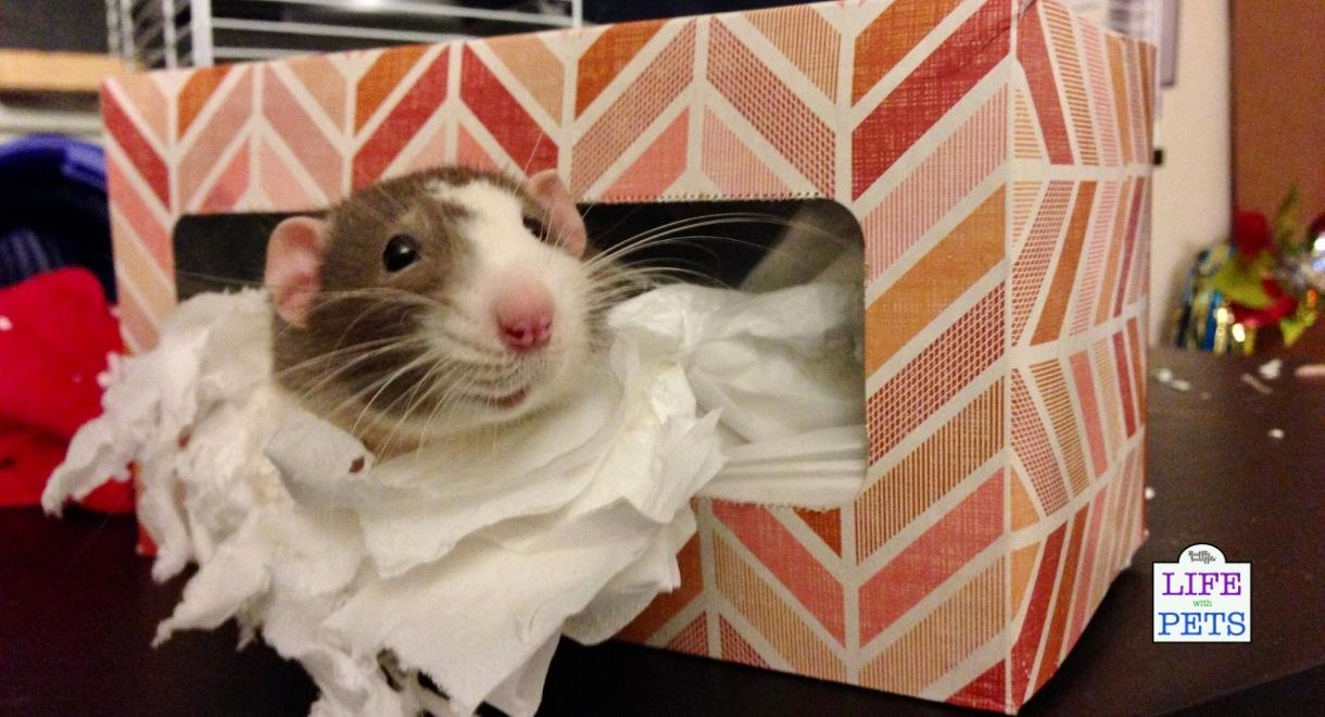 You can buy rat toys or invent your own enrichment with something as simple as a tissue box