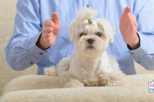 dog reiki healing therapy
