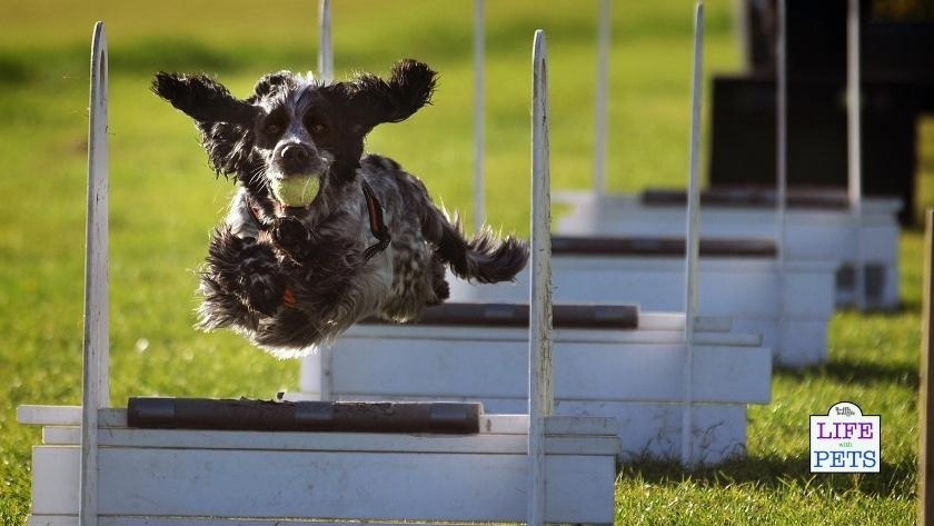Flyball is a great sport for you and your dog.