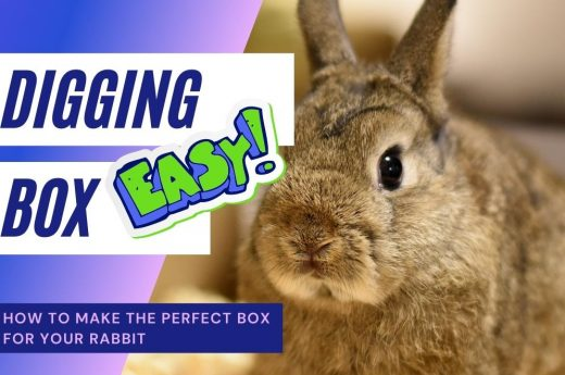 how to make the perfect rabbit digging box