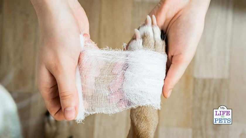 Treating Burns and scalds on your pet's skin