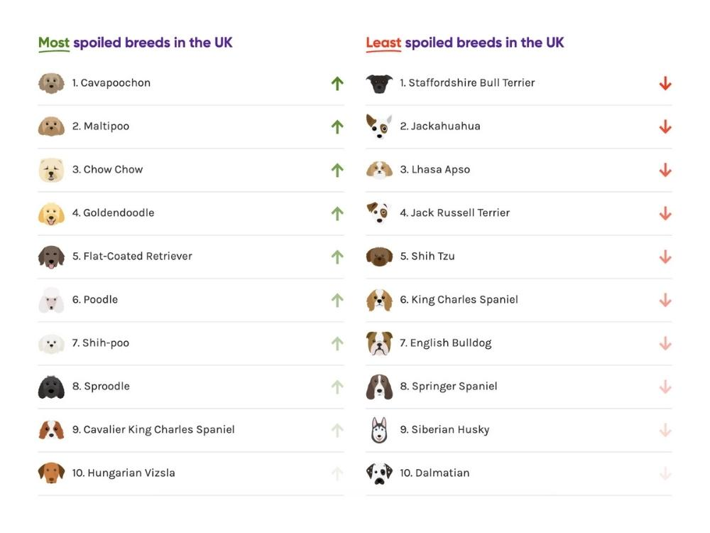 Most and Least Spoiled Dog Breeds UK