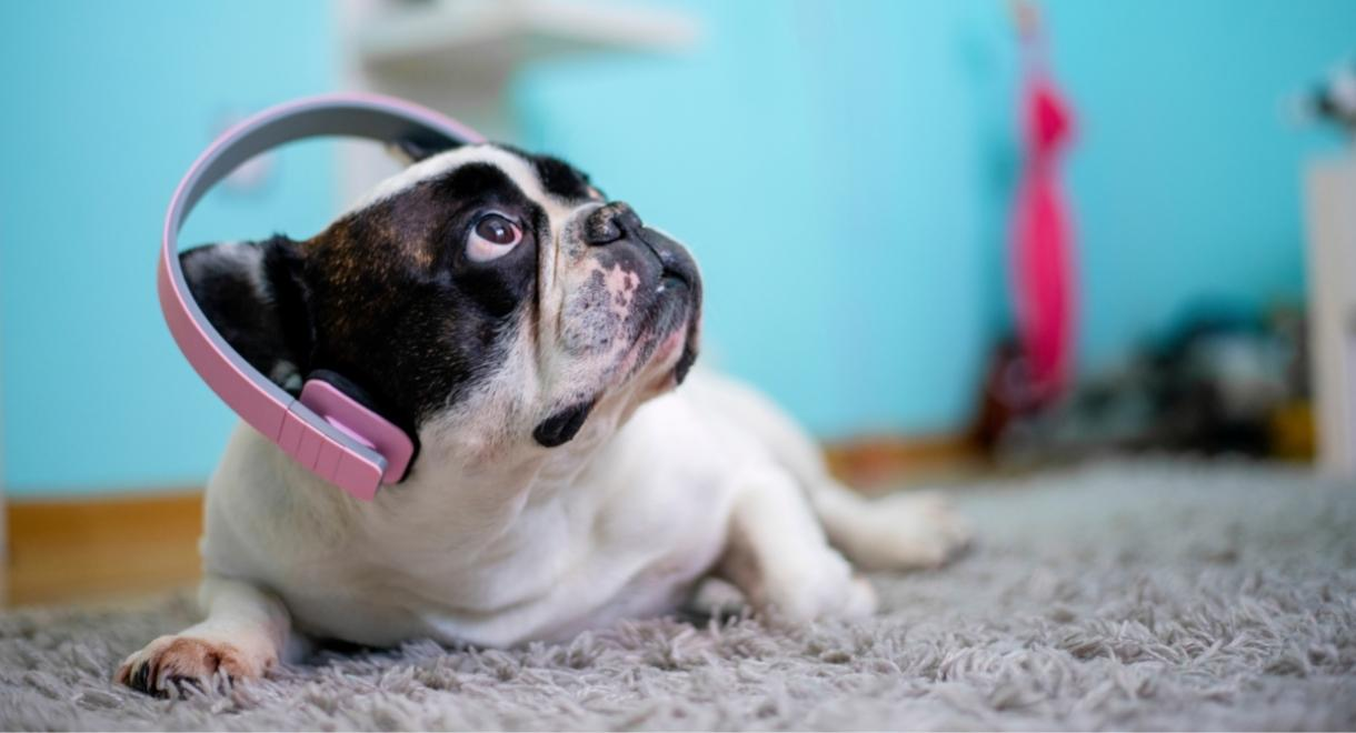 music for pups