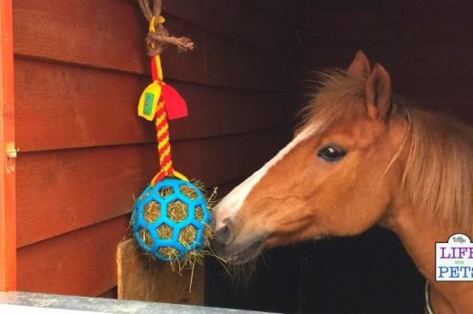 Horse Enrichment Ideas
