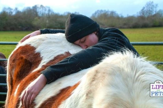 pony cuddles bonding