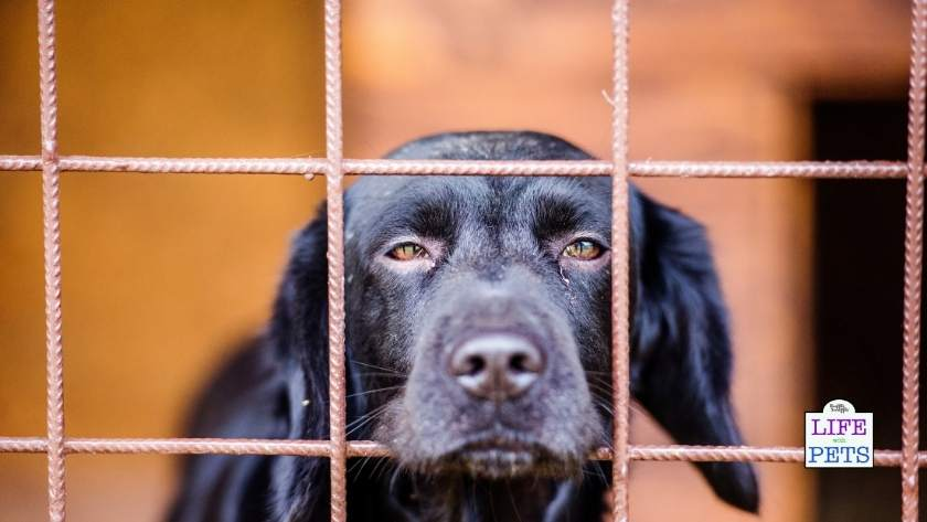 summer holidays without your dog