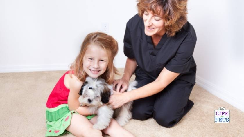 animal assisted therapy zootherapy
