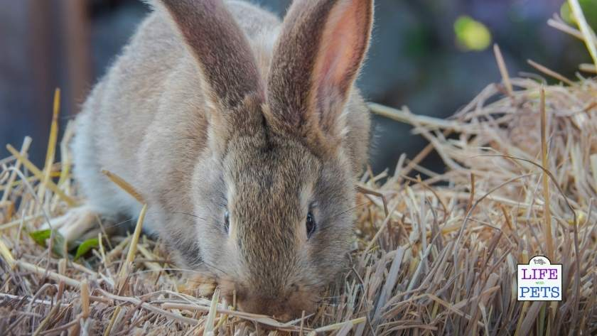 Rabbits love to forage for food
