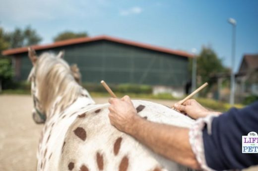acupuncture for pet horses