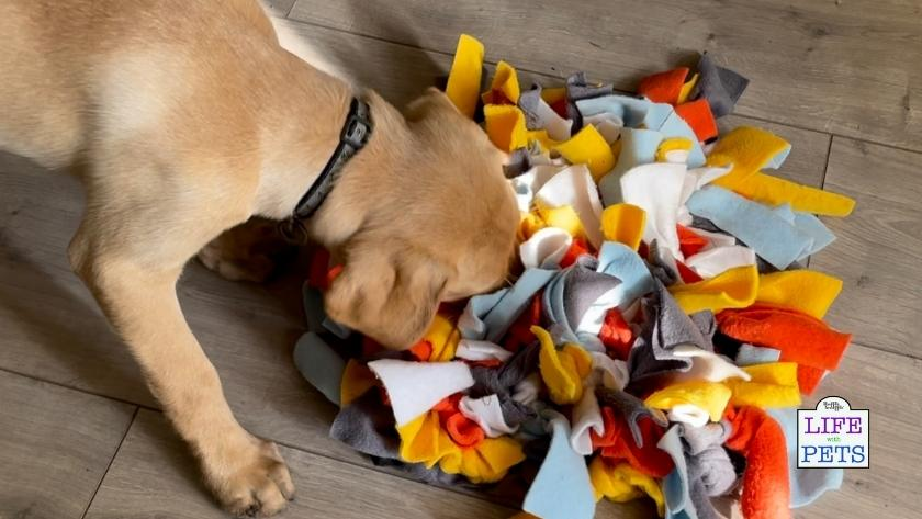 large dog breed puzzles top 10