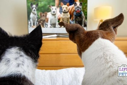 Keep Your Dog Entertained Whilst You Are at Work - DOG TV