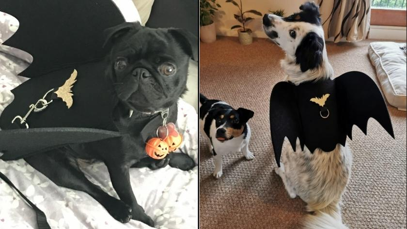 best halloween costumes for dogs 2021 1