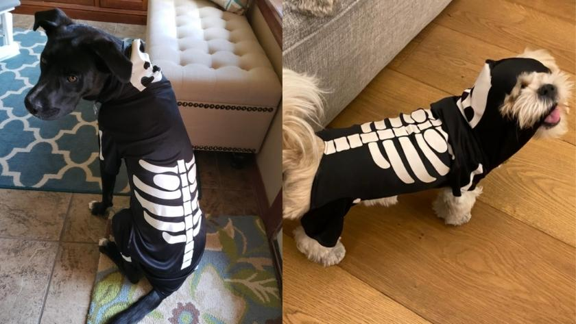 best halloween costumes for dogs 2021 - SKELETON